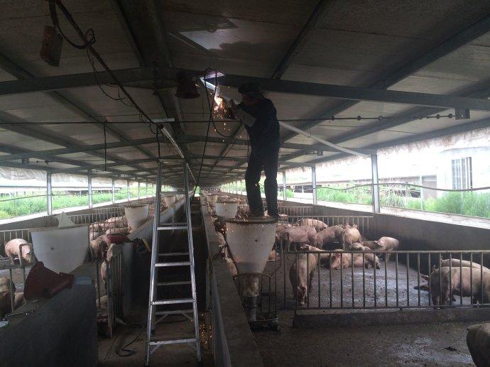 2014田东雄桂猪场保育育肥自动供料系统工程记录图片